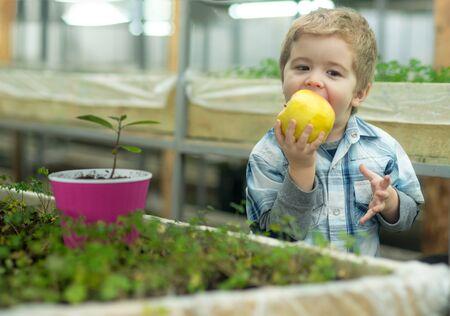 vitamin food. grow vitamin in food. small boy eating food with vitamin. vitamin food concept.