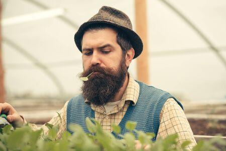 man farmer. bearded man farmer growing plants. man farmer in greenhouse. man farmer work with green plants. Reklamní fotografie
