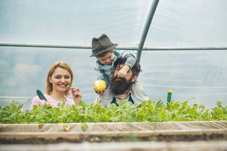 health care. health care of happy family. growing organic food for health care. health care concept. perfect gift for eny home. Reklamní fotografie