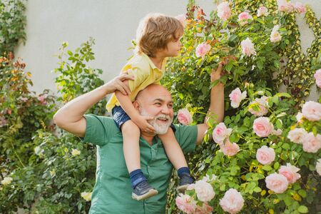 Grandfather carrying his grandson having fun in the park at the summer time. Father giving son ride on back in park. Happy grandfather giving grandson piggyback ride on his shoulders and looking up.