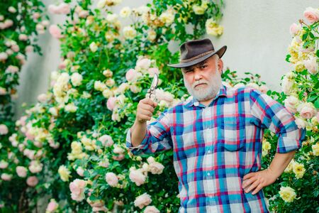 Spring time. Bearded Senior gardener in an urban garden. Portrait of handsome old bearded man on spring background. Senior man gardening in garden.