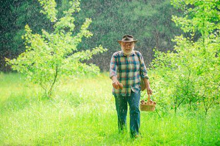 Mushrooming in forest, Grandfather hunting mushrooms over summer forest background. Senior mushroomer. Pensioner. Banco de Imagens