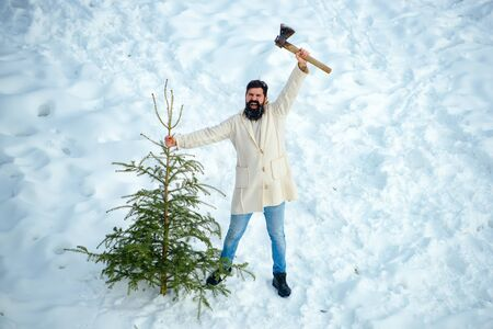 Excited Woodcutter with axe in the winter forest. Bearded man is carrying Christmas tree in the wood. Bearded man is carrying Christmas tree in the wood.