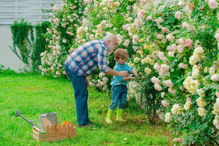 Grandfather and grandson. Old and Young. Concept of a retirement age. Spring and hobbies. A grandfather and a toddler are working in flowers park.