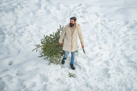 Young man lumberjack is cutting Christmas tree in the wood. Funny Santa man posing with axe and Christmas tree. Man lumberman with Christmas tree in winter park.