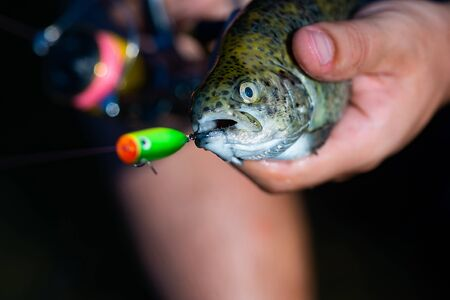 Fishing - relaxing and enjoying hobby. Fish head and fishing hook. Catches a fish. Fish trout on a hook. Trout. Fishing.