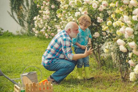 His enjoys talking to grandfather. Spring and summer. Father and son. Bearded Senior gardener in an urban garden. Gardening hobby. Stockfoto
