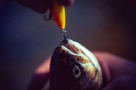 Fishing with spinning reel. Bass fishing splash. Fishing in river. Fly fishing - method for catching trout. Fisherman and trout. Holding brown trout.