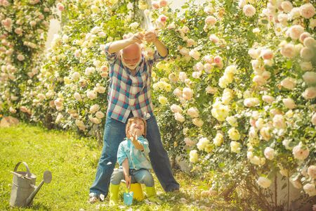 Gardening with a kids. Child are in the garden watering the rose plants. Flower ground. Father and son. Grandson and grandfather spend time in the orchard. Stok Fotoğraf