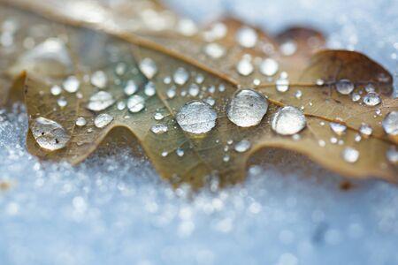 Congedo autunnale in una pozzanghera congelata in un modello di tipo geometrico unico. Foglie gialle autunnali ricoperte di ghiaccio. Relazioni congelate. Inizio inverno. Il freddo è vicino