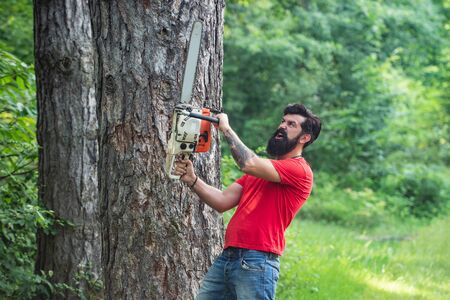 Logging. Firewood as a renewable energy source. Lumberjack in the woods with chainsaw axe. Professional lumberjack holding chainsaw in the forest. Stock Photo