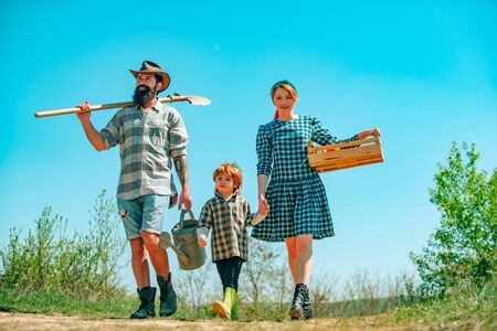 Small boy with father and mother in orchard in spring. Smile family on farmland. Family walking in agricultural field.