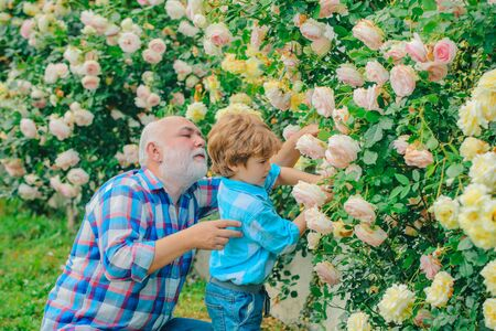 Planting flowers. Grandfather and grandson in beautiful garden. Gardener cutting flowers in his garden. His enjoys talking to grandfather.