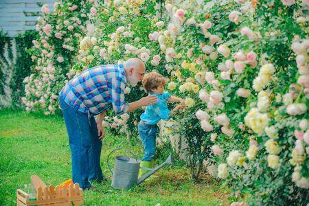 Gardening - Grandfather gardener in sunny garden planting roses. Gardener in the garden. Little helper in garden. Hobbies and leisure. Flower ground.