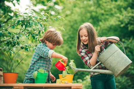 Watering flowers in garden. Kids planting flowers in pot. Children farmer in the farm with countryside background. 版權商用圖片