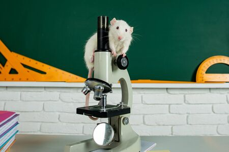 Laboratory rat in a lab. Concept - testing of drugs, vaccines laboratory animals. Humanity genetic studies