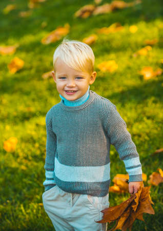 Autumn child have fun and playing with fallen golden leaves. Kids in warm knitted sweater.
