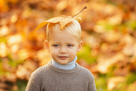 Child boy walking in the autumn park. Happy childhood concept. Kids in warm knitted sweater. Yellow maple leaves on kids head.