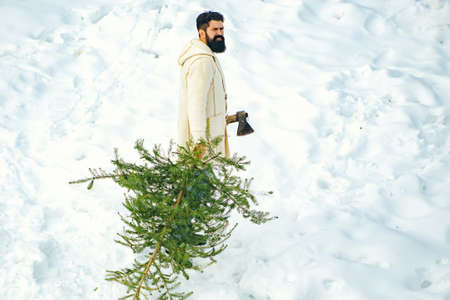Young lumberjack bears fir tree in the white snow background. A handsome lumber with a beard carries a Christmas tree. Merry Christmas and Happy Holidays.
