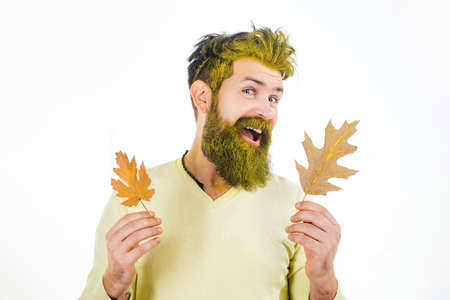 Studio portrait male model with yellow leaves. Young bearded man in trendy vintage pullover or sweater. Hello autumn. Stockfoto