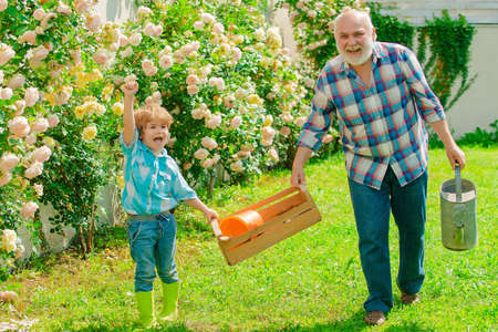 Grandfather and grandson. Old and Young. Concept of a retirement age. Father and son grows flowers together. Senior man with grandson gardening in garden.