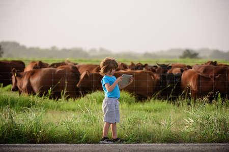 Little farmer holding tablet near cows farm. Summer kids at countryside. Children enjoy in farm. Farmer helper kid examining common fig crop in plantation or field.