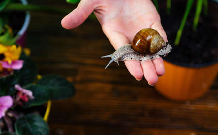 Healing mucus. Snail farm concept. Adorable snail close up. Little slime with shell plant pot. Cosmetology beauty procedure. Cosmetics and snail mucus. Cute snail near green plant. Natural remedies