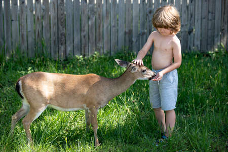 Cute child feeding a fawn. Pretty boy with graceful animal at park or in the forest. Kids adaptation.