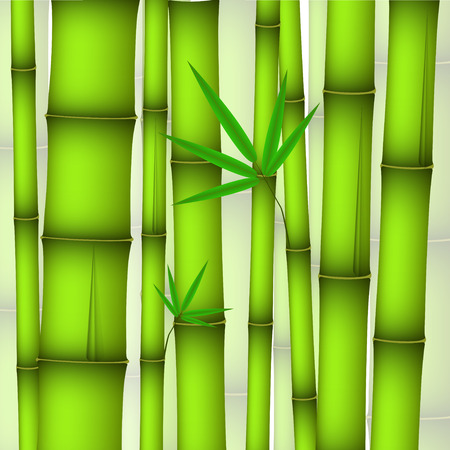 zenlike: green bamboo stems and twig with leaves