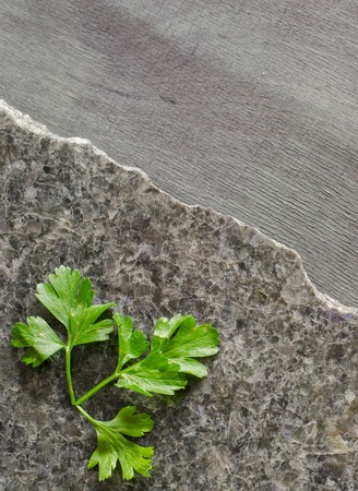 parsley leaves on a dark polished stone with an irregular fracture. Against the background of ebony Top view, space for text Stock Photo
