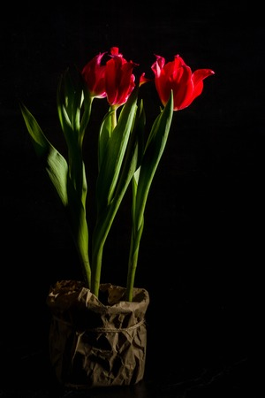 lurid: Red and scarlet tulips on a black background. Lots of space for text. Side view.