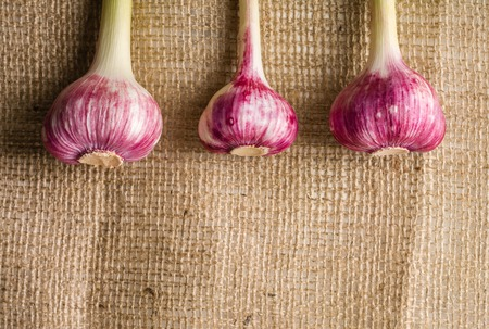 Garlic purple with a stem on the background of coarse burlap. A lot of empty space.