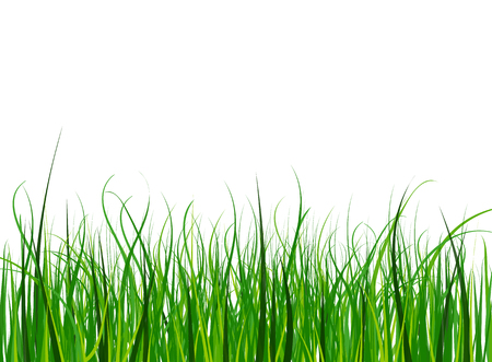 Bright and juicy green grass on a blue sky background.