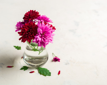 Autumn background on white stone from chrysanthemum. Autumn flower. Lots of space for text