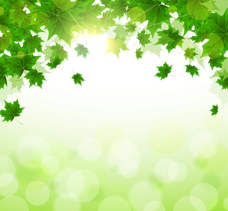 Marco de hojas verdes frescas de arce. Día soleado de primavera o verano. Despertar de la naturaleza. Portada o fondo de un artículo. Copie el espacio.
