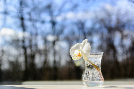 Orchid flower in a glass against the window. Spring weather and blue sky