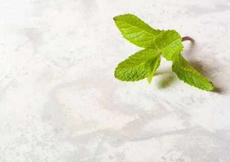 A lone twig with mint leaves lying on a white stone table. A lot of space for text or photo.