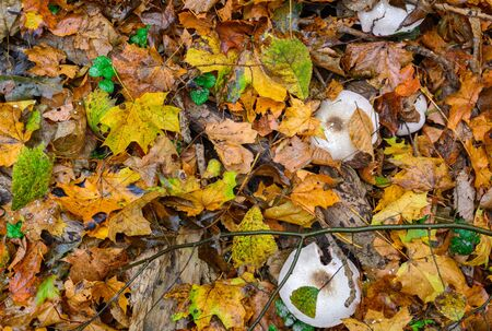 Earth in the autumn forest. Leaves and cobwebs, mushrooms and moisture
