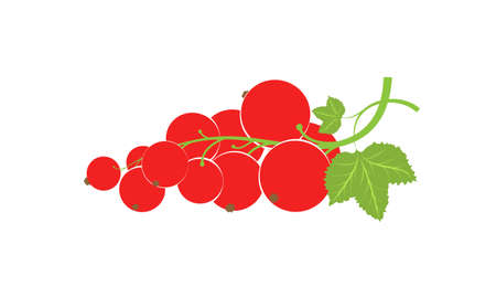 A sprig with redcurrant berries. Large, fresh red berries. Harvest of the summer harvest. Healthy food with vitamins. Illusztráció