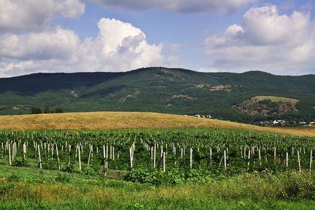Beautiful Vineyard Landscape Stock Photo - 7481299
