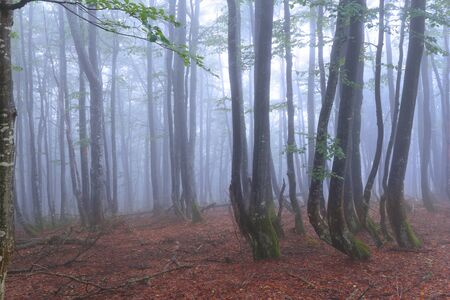 Foggy morning in the forest Stock Photo - 14395638