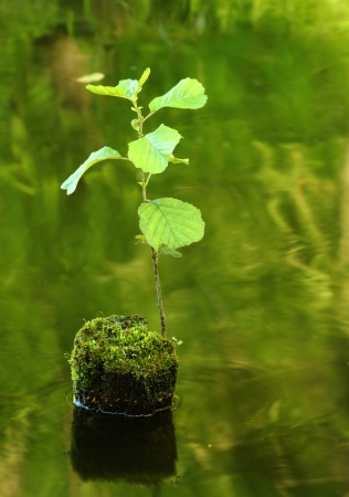 New tree sprout growing from the dead tree covered with moss in the water Stock Photo - 14395600