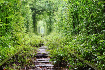 natural arch: Natural tunnel of love formed by trees in Ukraine