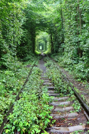 Natural tunnel of love formed by trees in Ukraine Stock Photo - 14577298