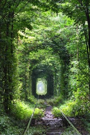 endlos: Natürliche Tunnel der Liebe von Bäumen in der Ukraine gebildet