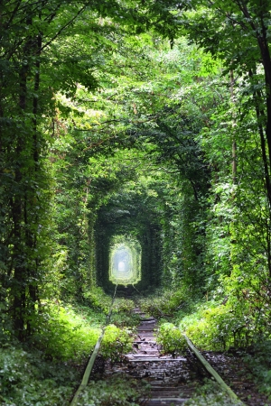 Natural tunnel of love formed by trees in Ukraine photo