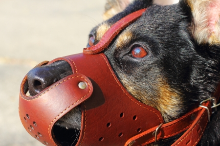 Shepherd dog closeup with a muzzle on Stock Photo - 15887812