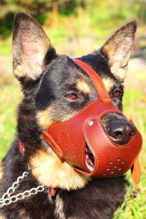 Shepherd dog closeup with a muzzle on Stock Photo - 15887814