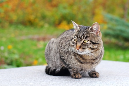 Brown mongrel cat over autumnal background Stock Photo - 16033198
