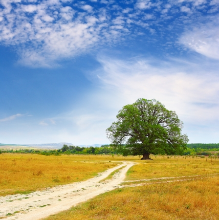 Rural road leading to a lonely oak tree in Autumn Stock Photo